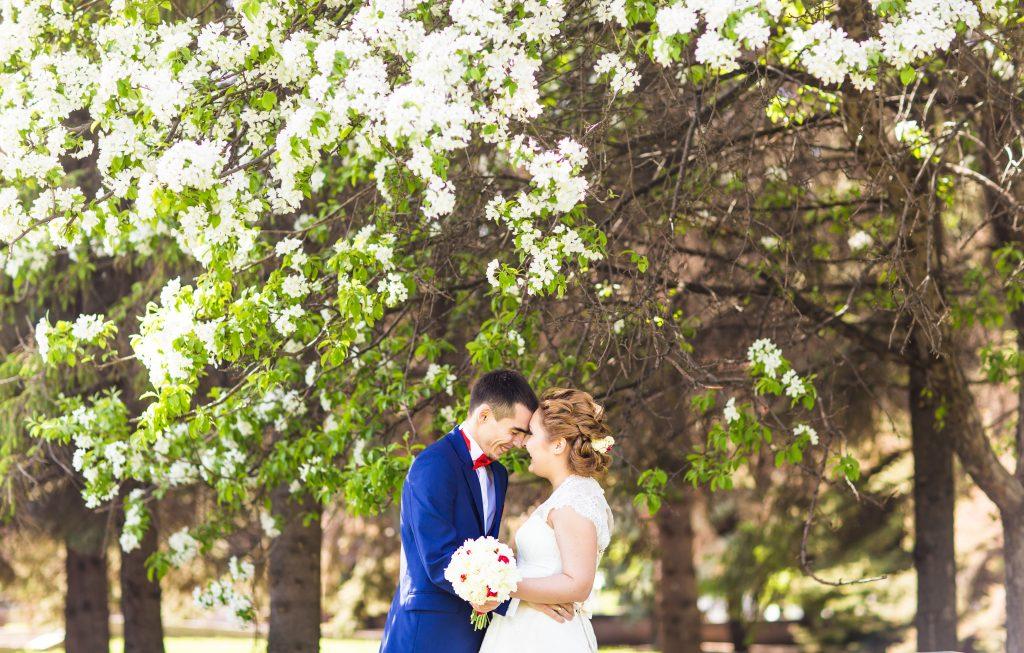 quel arbre offrir pour un mariage