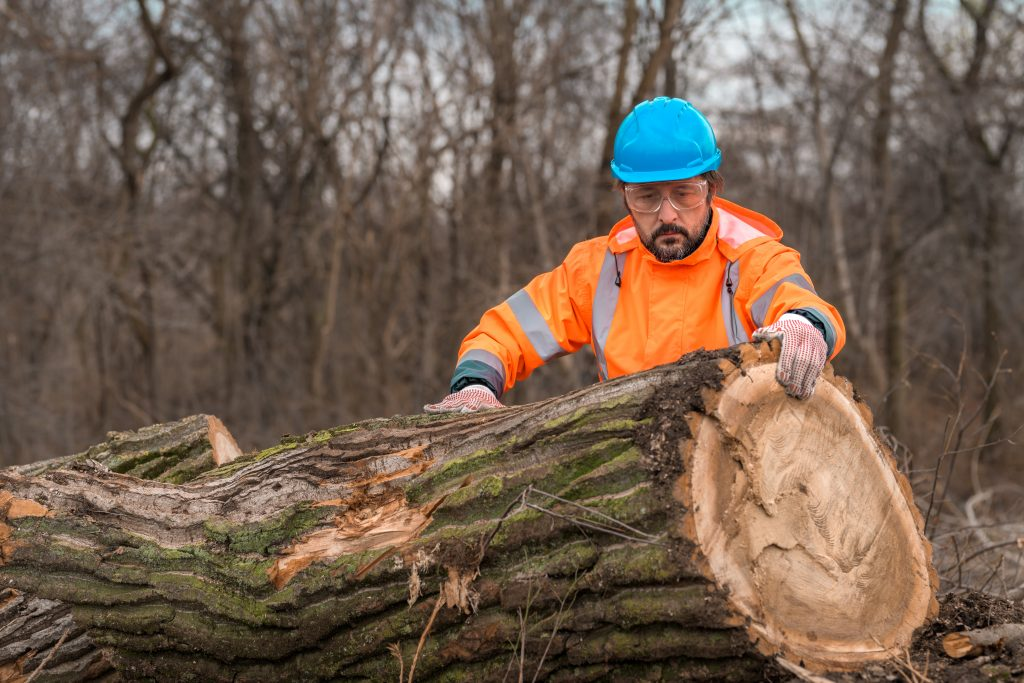 combien coute elagage d un arbre