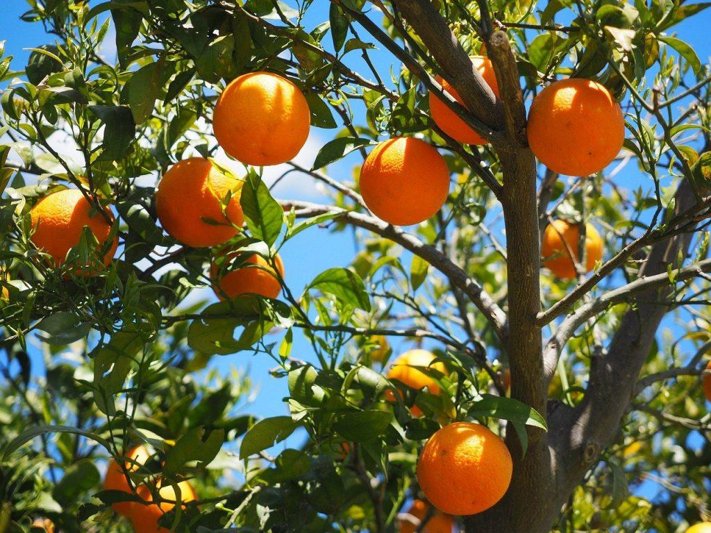 Comment s'appelle un arbre qui produit des fruits ?