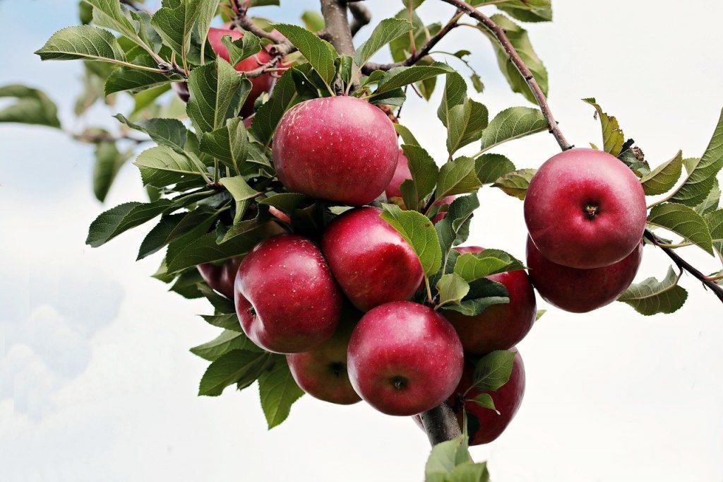 Pouvez-vous greffer un arbre fruitier sur un arbre non fruitier ?