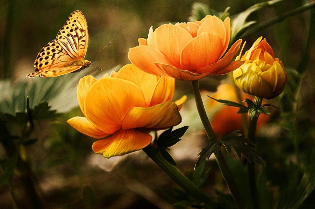 Qu'est-ce qu'un exemple de fleur complète ?