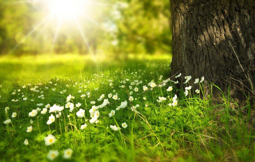 Qu'est-ce qu'une fleur incomplète ?