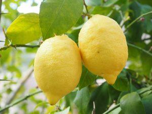 Quel arbre fruitier est le plus facile à cultiver ?