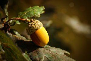 Quel arbre produit le plus de fruits ?