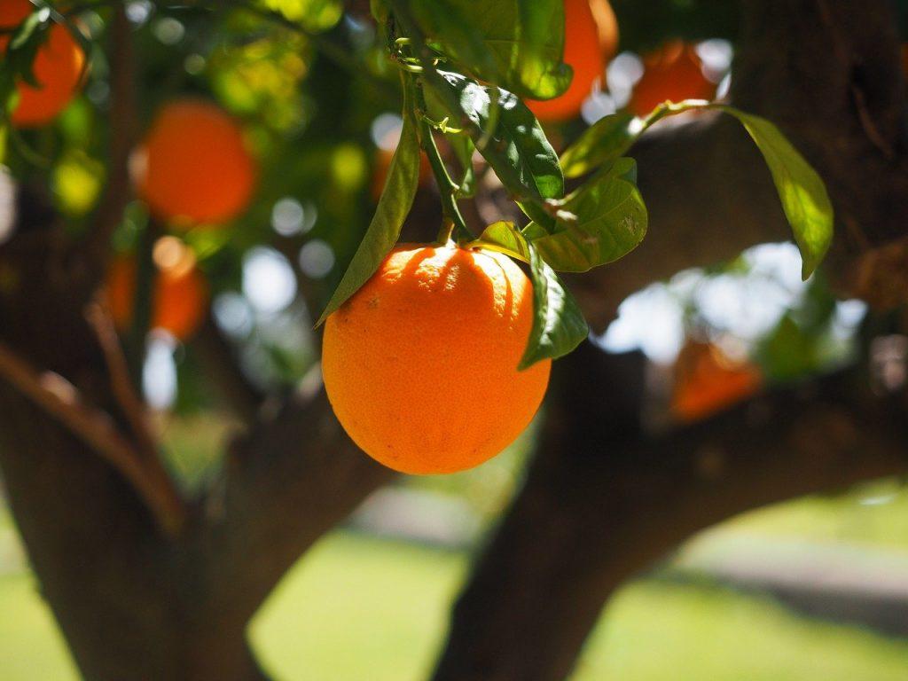 Quel est l'arbre fruitier à la croissance la plus rapide ?