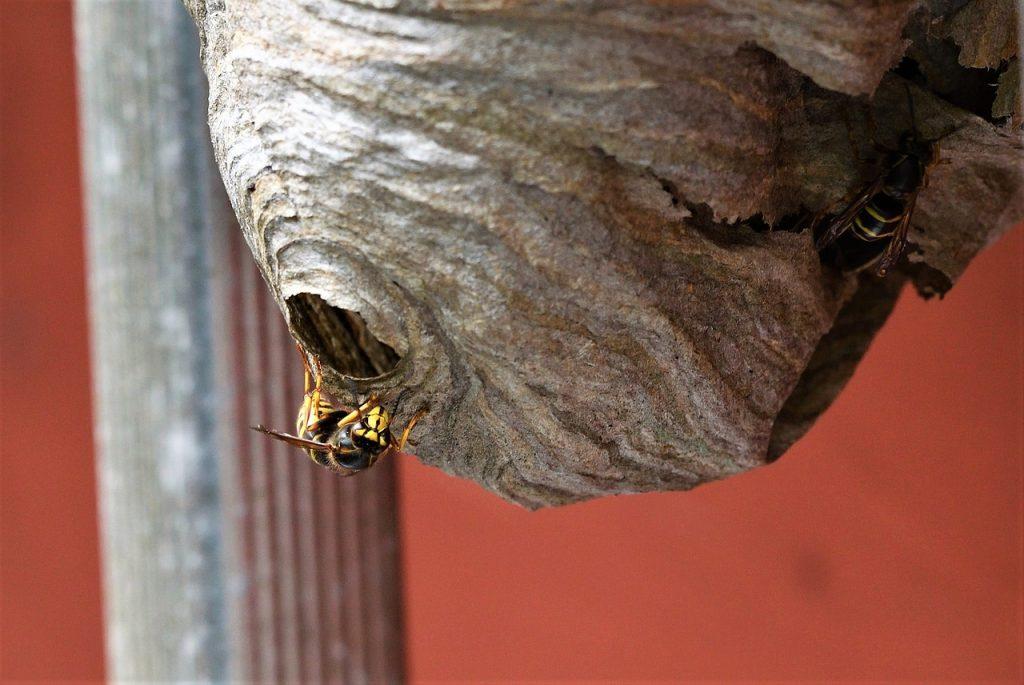 Quel produit pour detruire un nid de guepes ?