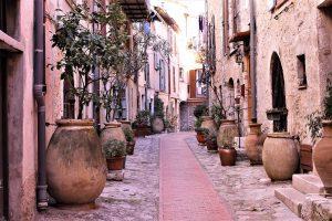 Quel terreau pour olivier en pot ?