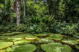 Quelle est la différence entre la forêt tropicale et la jungle ?