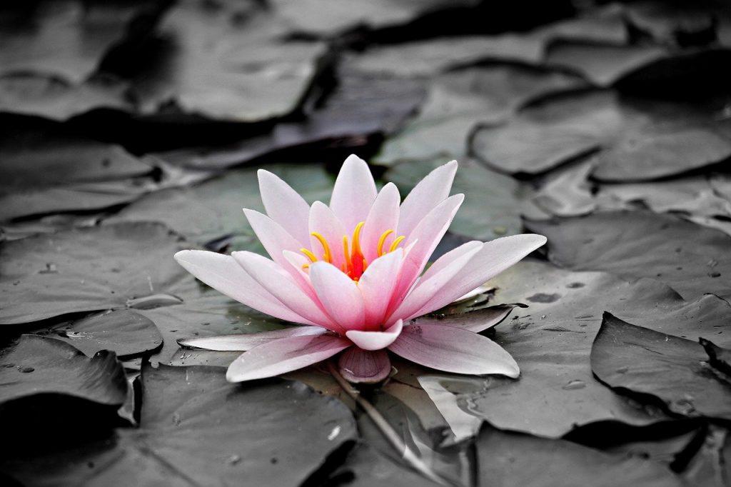 Quelle est la fleur la plus triste ?