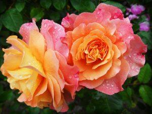 Quelle fleur est pour le souvenir ?