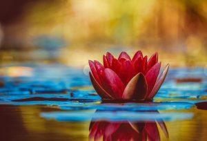 Quelle fleur signifie gentillesse ?