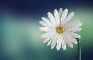 Quels sont les quatre organes d'une fleur complète ?