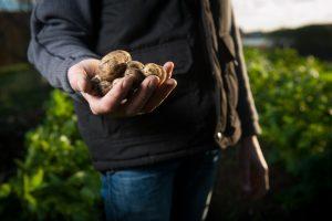 La permaculture : l'agriculture de demain pour cultiver vos pommes de terre