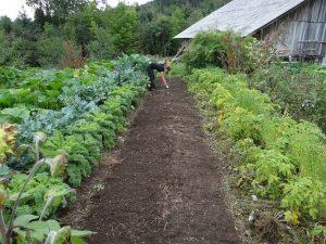 Combien cela coûte-t-il de fabriquer une boîte de jardin ?