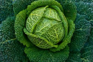Est-ce vraiment moins cher de cultiver vos propres légumes ?