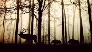 Qu'est-ce qu'une définition d'animal sauvage ?