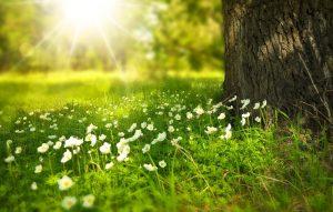 Qu'est-ce qui compose une fleur ?