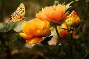 Que signifient les différents types de fleurs ?