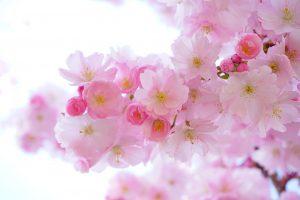 Quelle fleur symbolise la vie ?