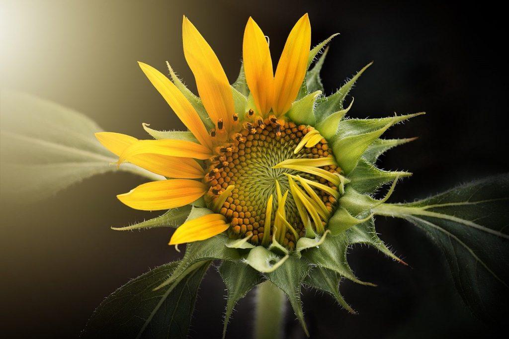 Quelle fleur symbolise le danger ?