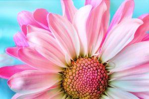 Quelles sont les 4 parties principales de la fleur ?