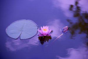 Quelles sont les cinq parties principales d'une fleur ?