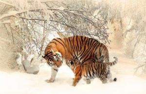 Les animaux sont-ils sensibles ?