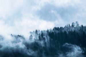 Pourquoi les forêts de marée sont-elles ainsi appelées ?