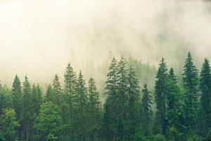 Pourquoi les scientifiques sont-ils préoccupés par la fragmentation des forêts ?