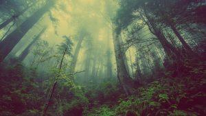 Qu'est-ce qui distingue une forêt de feuillus d'une forêt de conifères ?