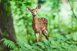 Quels animaux bondissent ?