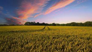 L'agriculture sur brûlis est-elle durable ?