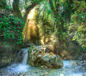 La forêt tropicale est-elle une jungle ?