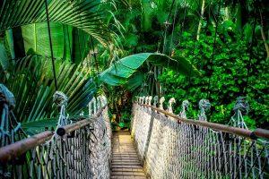 Où dans le monde se trouvent les jungles ?