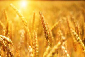 Qu'est-ce que l'agriculture et les types d'agriculture ?