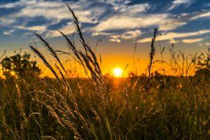 Que comprend l'agriculture ?