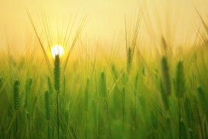 Quelle est l'importance de l'agriculture ?