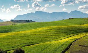 Quels sont les produits agricoles ?