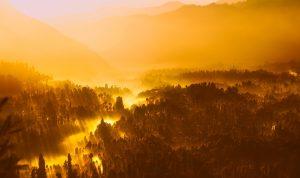Une forêt tropicale est-elle une jungle ?